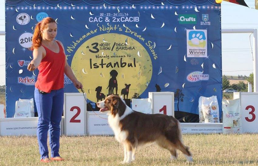 Köpek ırkları Silivri'de yarışacak